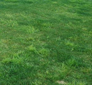 чистый газон