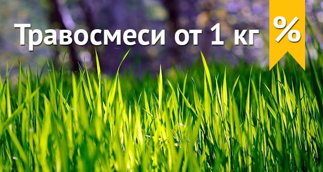 насіння газону